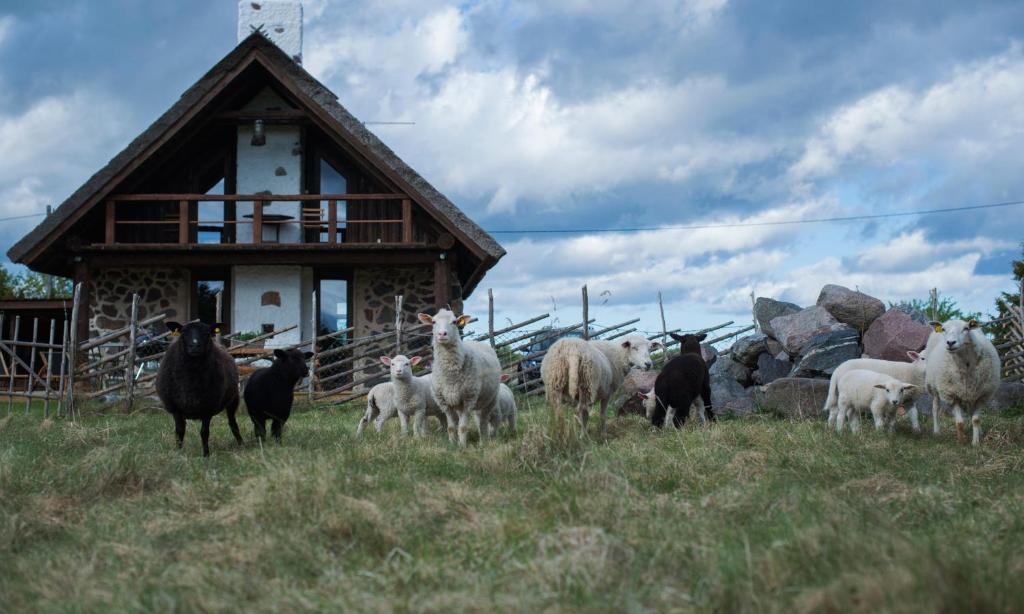 Loomad külalistemaja aladel või selle läheduses