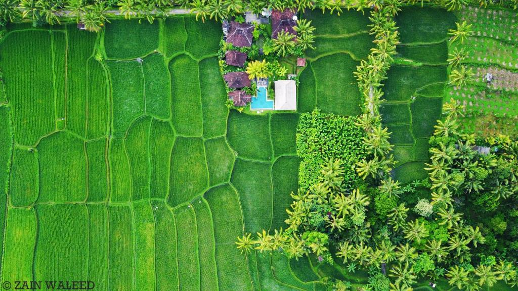 A bird's-eye view of Hati Padi Cottages