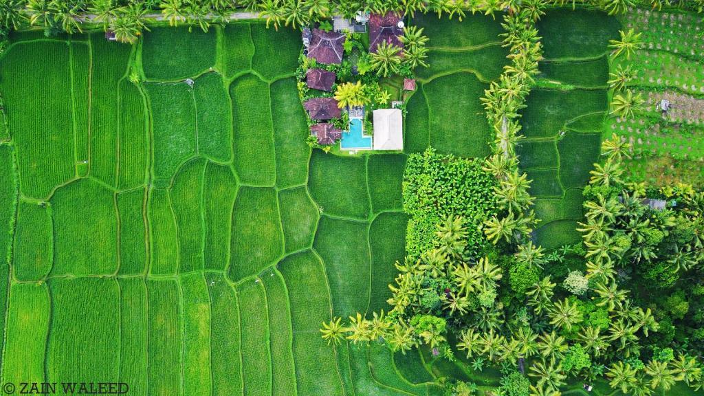 Een luchtfoto van Hati Padi Cottages