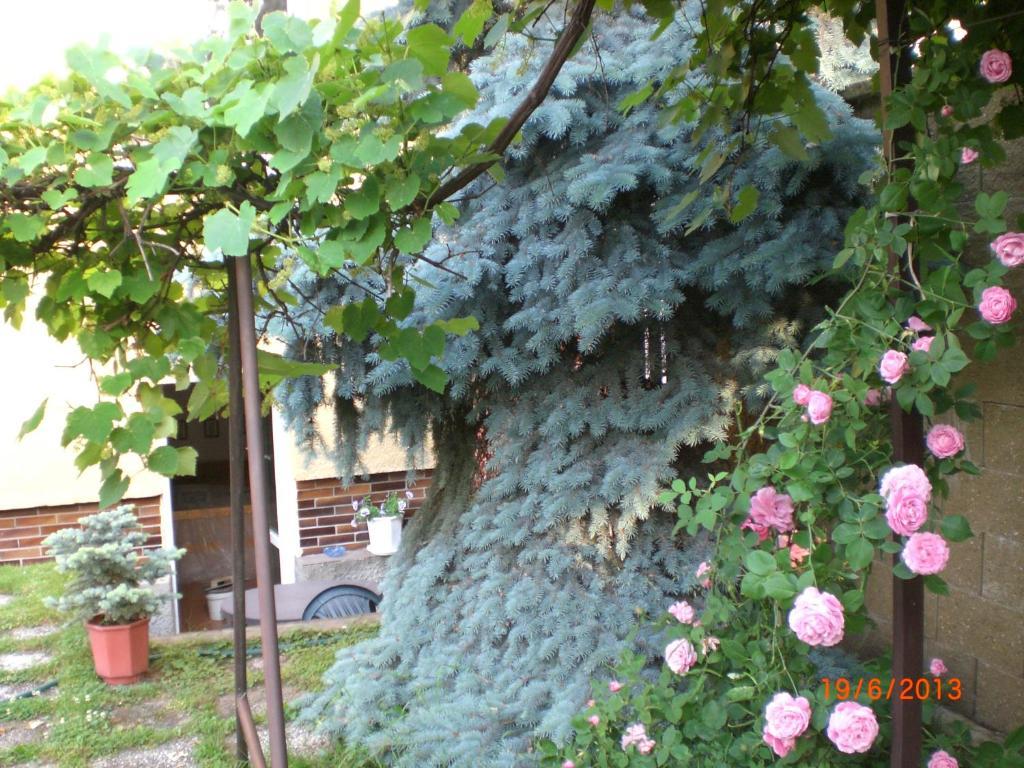 Un jardín fuera de Family pension