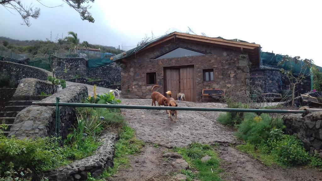 Casas de campo tenerife