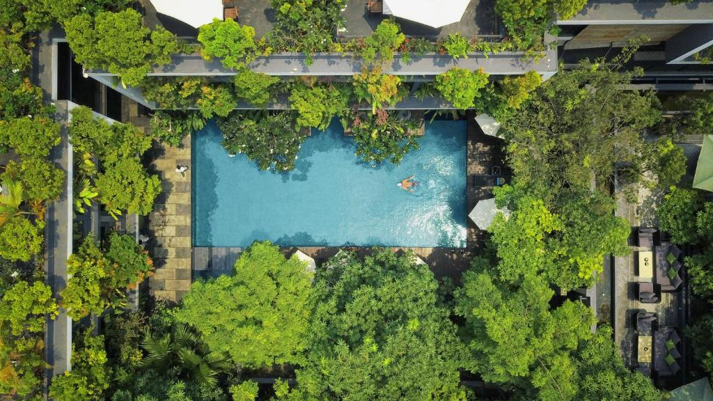 A bird's-eye view of Anjali by Syphon