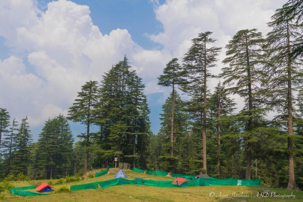 The swimming pool at or near Travelosic Forest Campsite