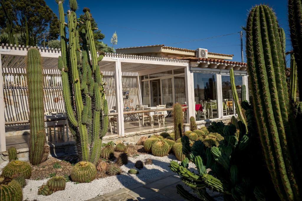 Botanical Park Garden Cactus
