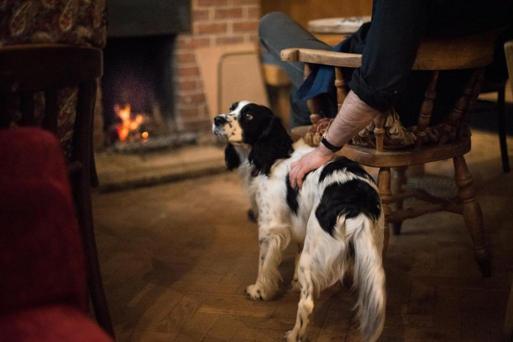 Pet or pets staying with guests at Helen Browning's Royal Oak