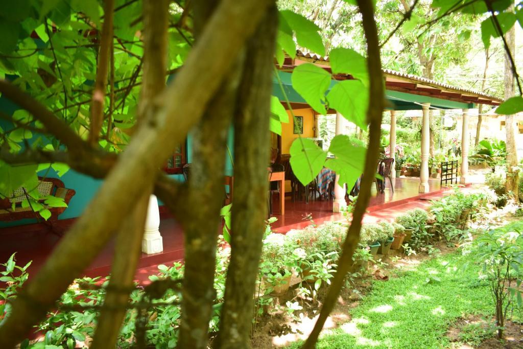 Ein Garten an der Unterkunft Palitha Homestay