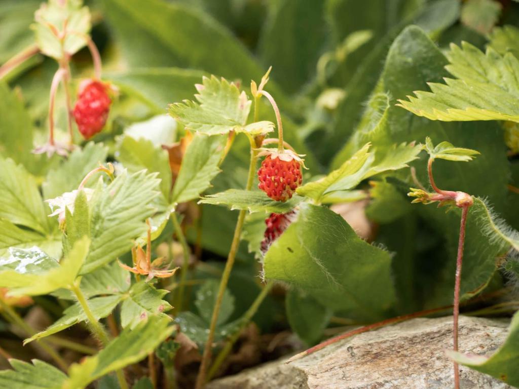 Sillian dating berry, Taxenbach singlespeedshop