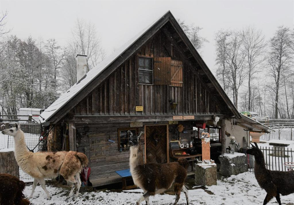 Veranstaltungen | Oberndorf an der Melk