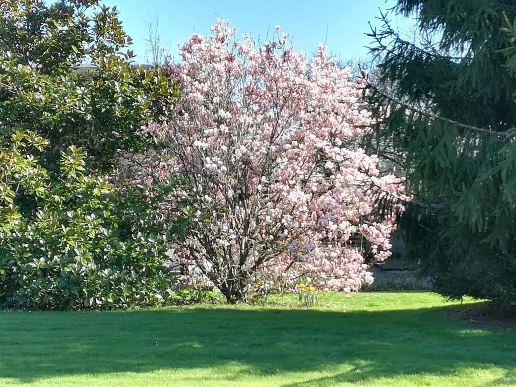Jardin de l'établissement Le Clos Beauvallet