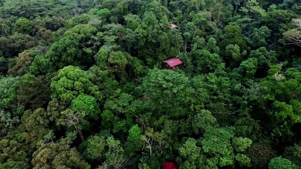 A bird's-eye view of La Loma Jungle Lodge and Chocolate Farm