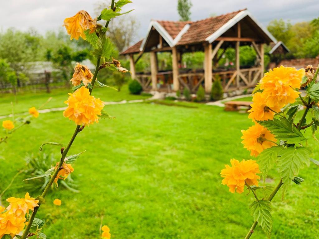 "A garden outside Casa ""La Moara din Gradina"""
