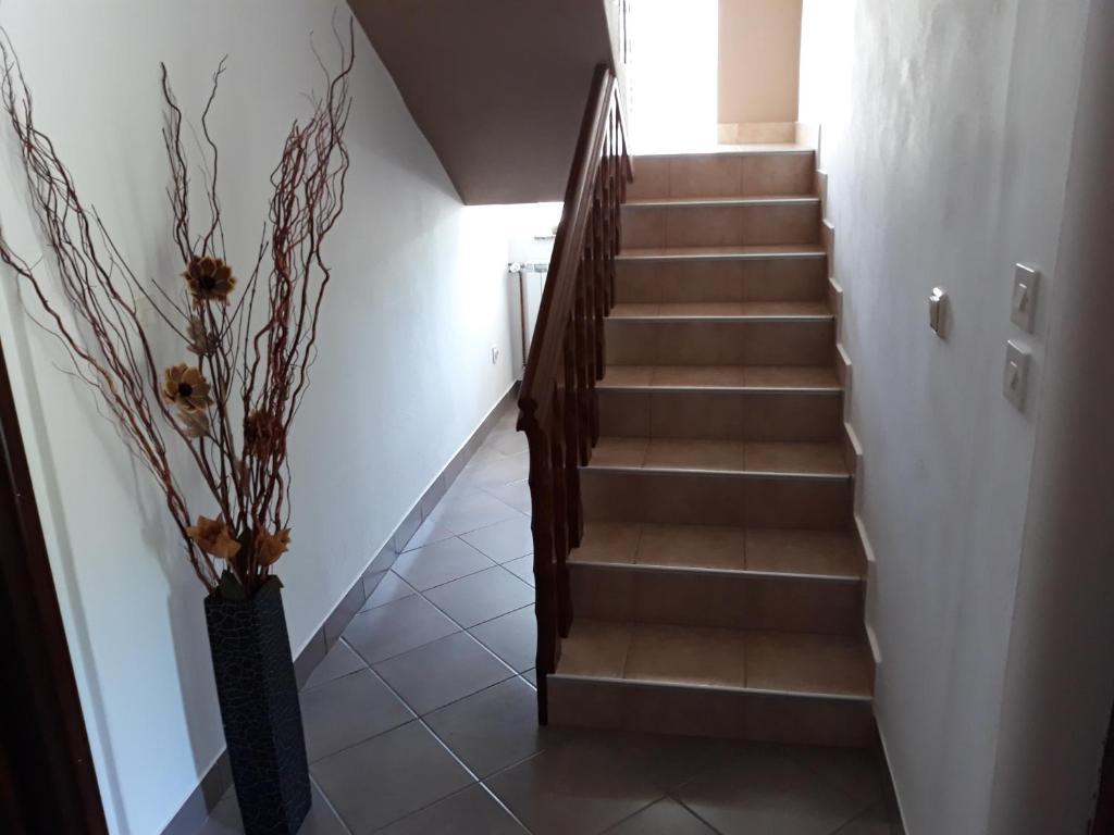 House Zlatko