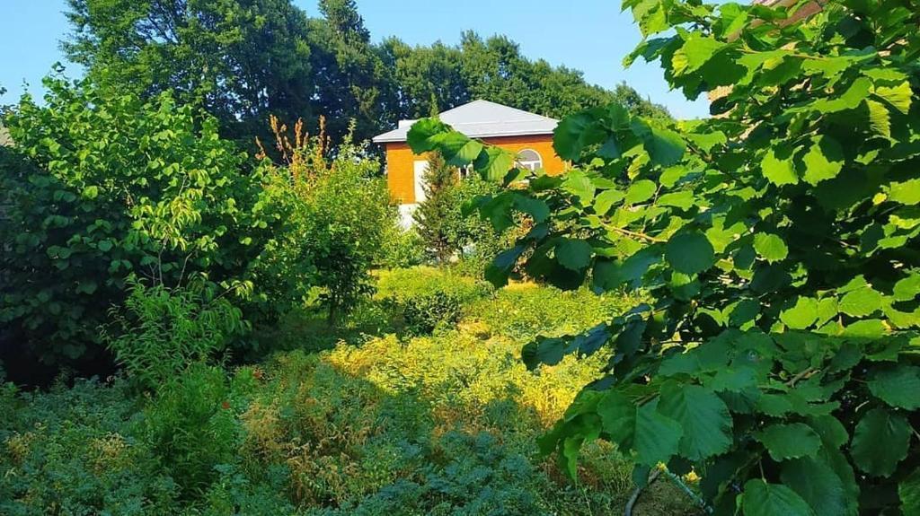 Lankaran FRESH Hostel tesisinin dışında bir bahçe