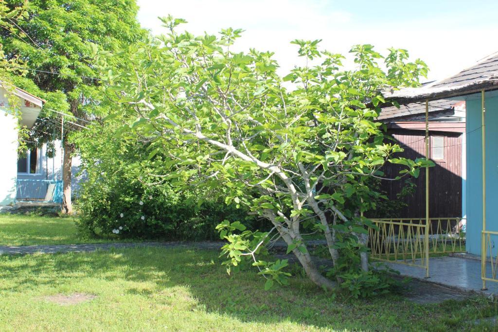 Un jardín fuera de Vestony Bungalows