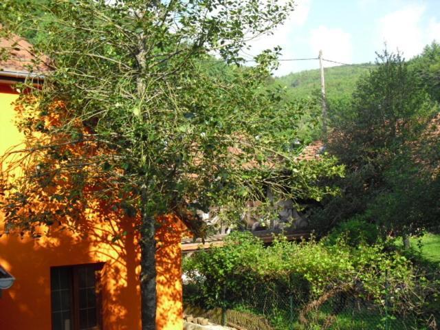 Jardin de l'établissement Gite S'Hiesla