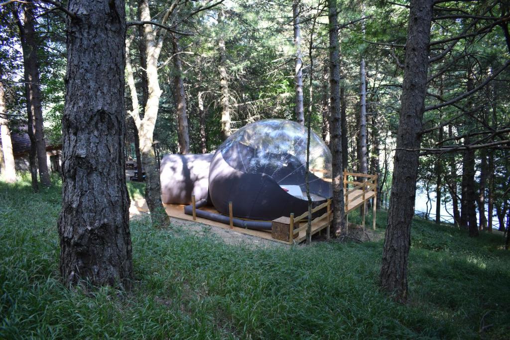 Altri animali domestici presso the luxury tent o nei dintorni