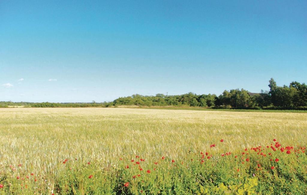 Strandng, Brucebo naturreservat, Vskinde socken, Gotland