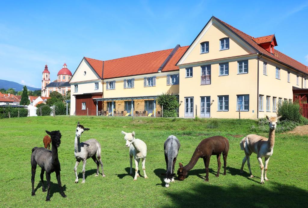 Kursfcher - Musikschule Pllau - Vorau - Joglland - www