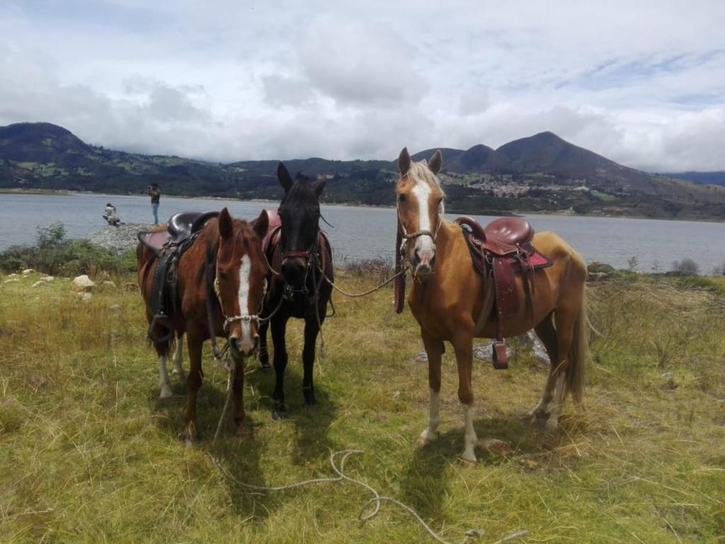 Horseback riding at the chalet or nearby