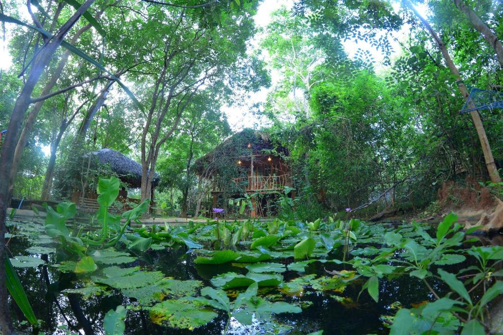 A garden outside Mutu Village treehouse tourist board approved bungalow