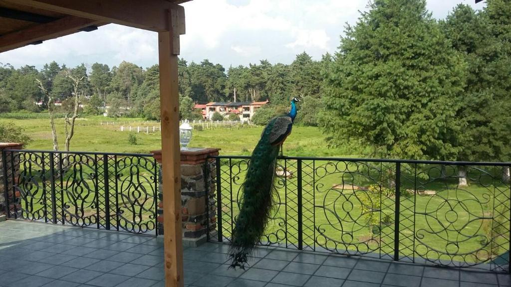 Hotel Temazcal El Quetzal México Atlautla Booking Com