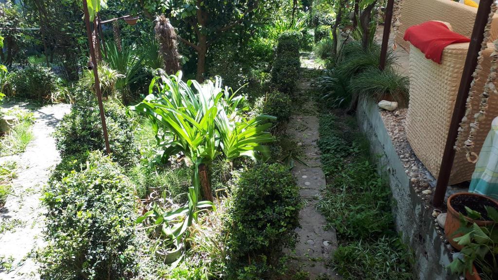 Сад в Raiskiy ugolok