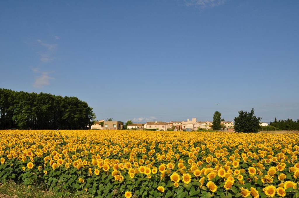 L'hort de Sant Cebrià 38