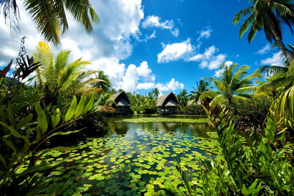 Πισίνα στο ή κοντά στο Maitai Lapita Village Huahine