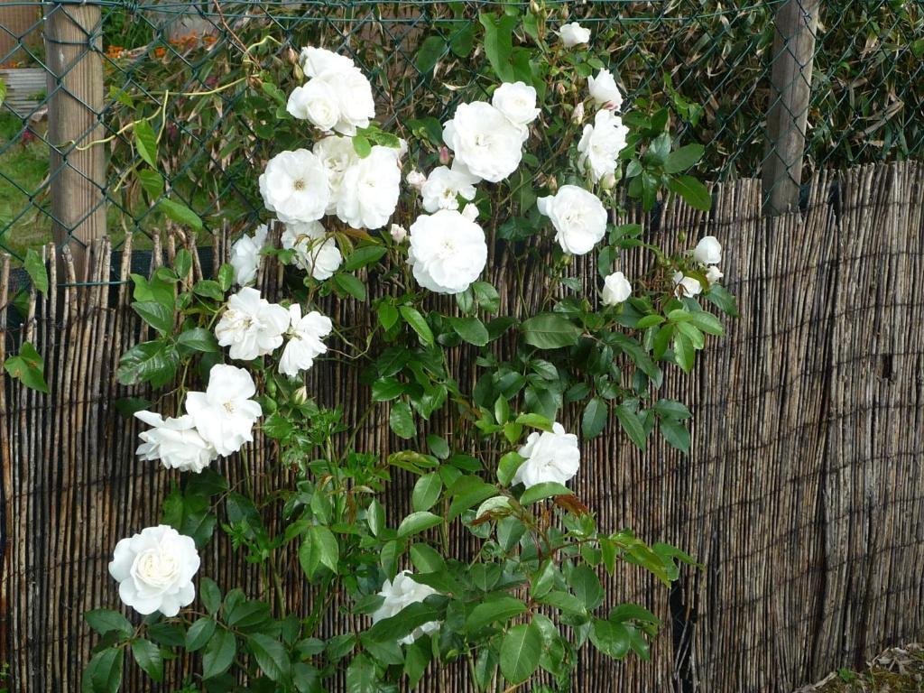Chambre d'hôte Fleur de Potager