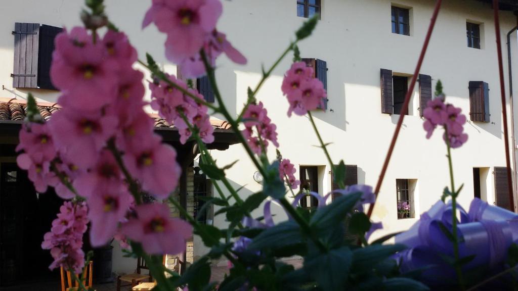 Fiori Maggio.Bed And Breakfast Fiori Di Maggio Muscletto Italy Booking Com