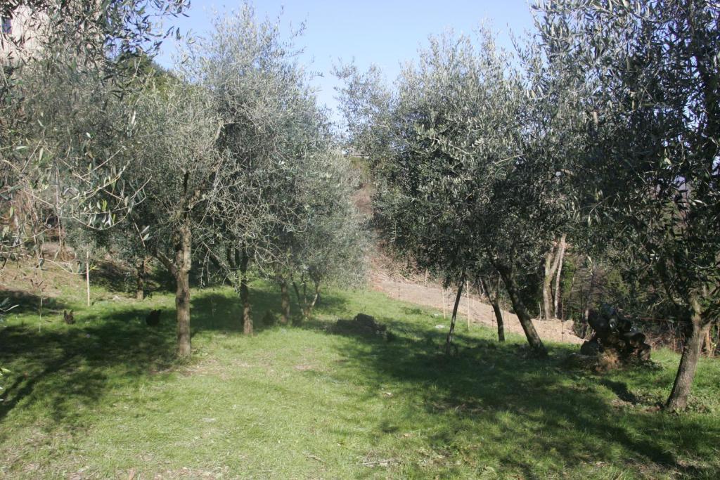 Borgo Dei Malaspina