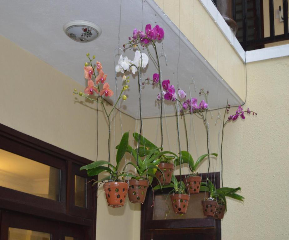 Hoa Phong Lan Homestay