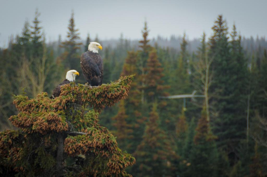 Eagle's Eye Vacation Rentals