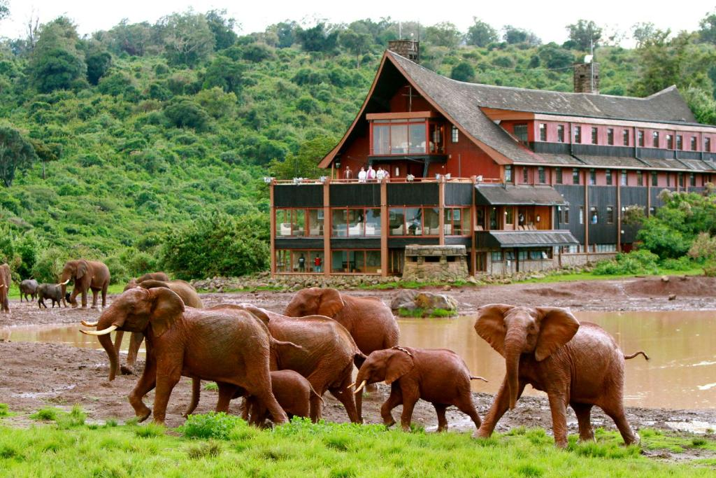 The Ark Lodge Nyeri Kenya Bookingcom