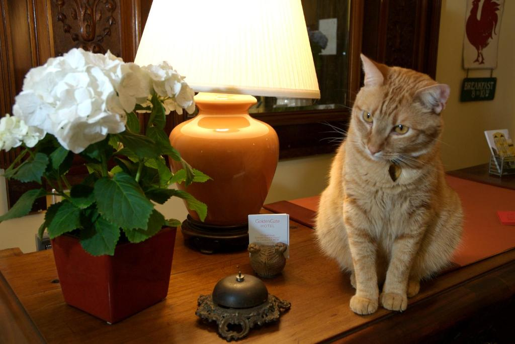 Pet or pets staying with guests at Golden Gate Hotel
