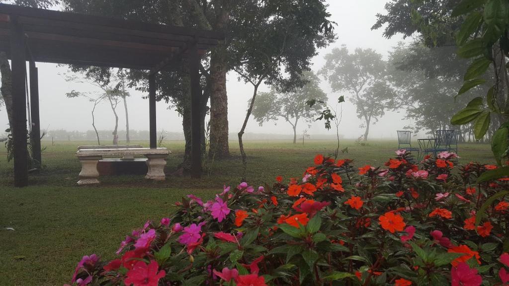 Bosque Da Neblina