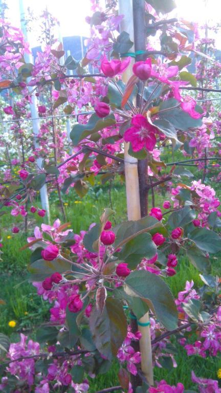 A garden outside Agritur Leita