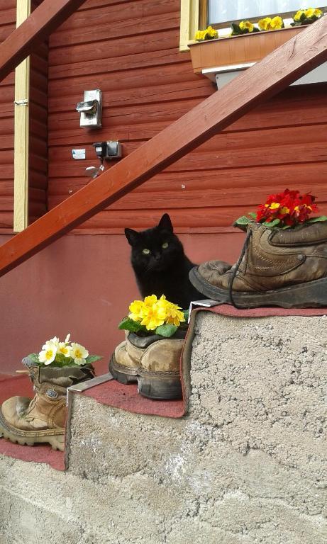 Haustiere von Gästen der Unterkunft Ferienanlage Reinsberger Dorf