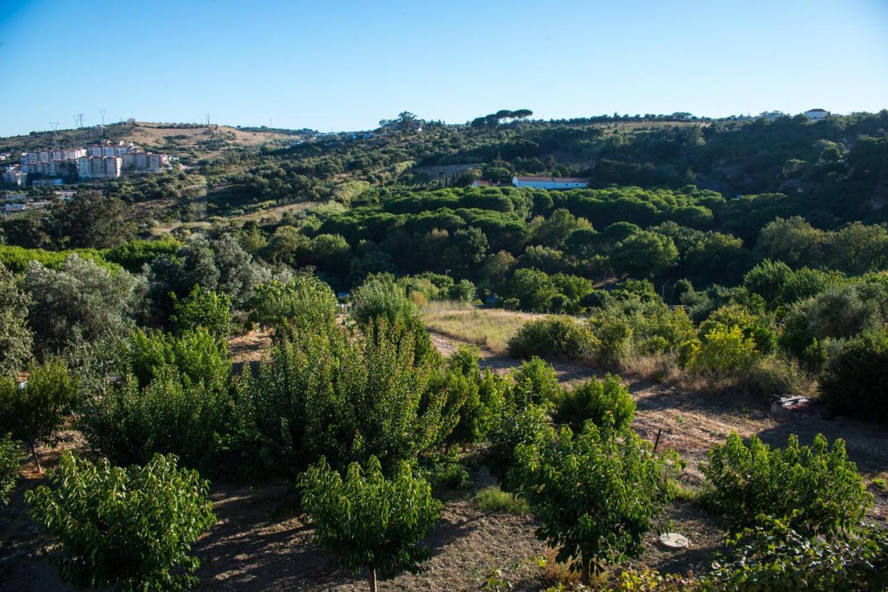 Дом для отпуска  Quinta Montebelo