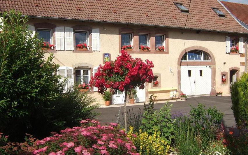 Bed And Breakfasts In Wangenbourg Alsace