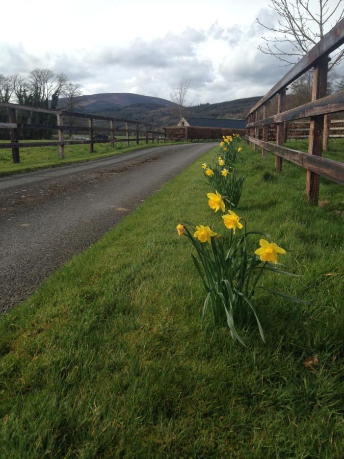 Flat View - Carrick Road Runners
