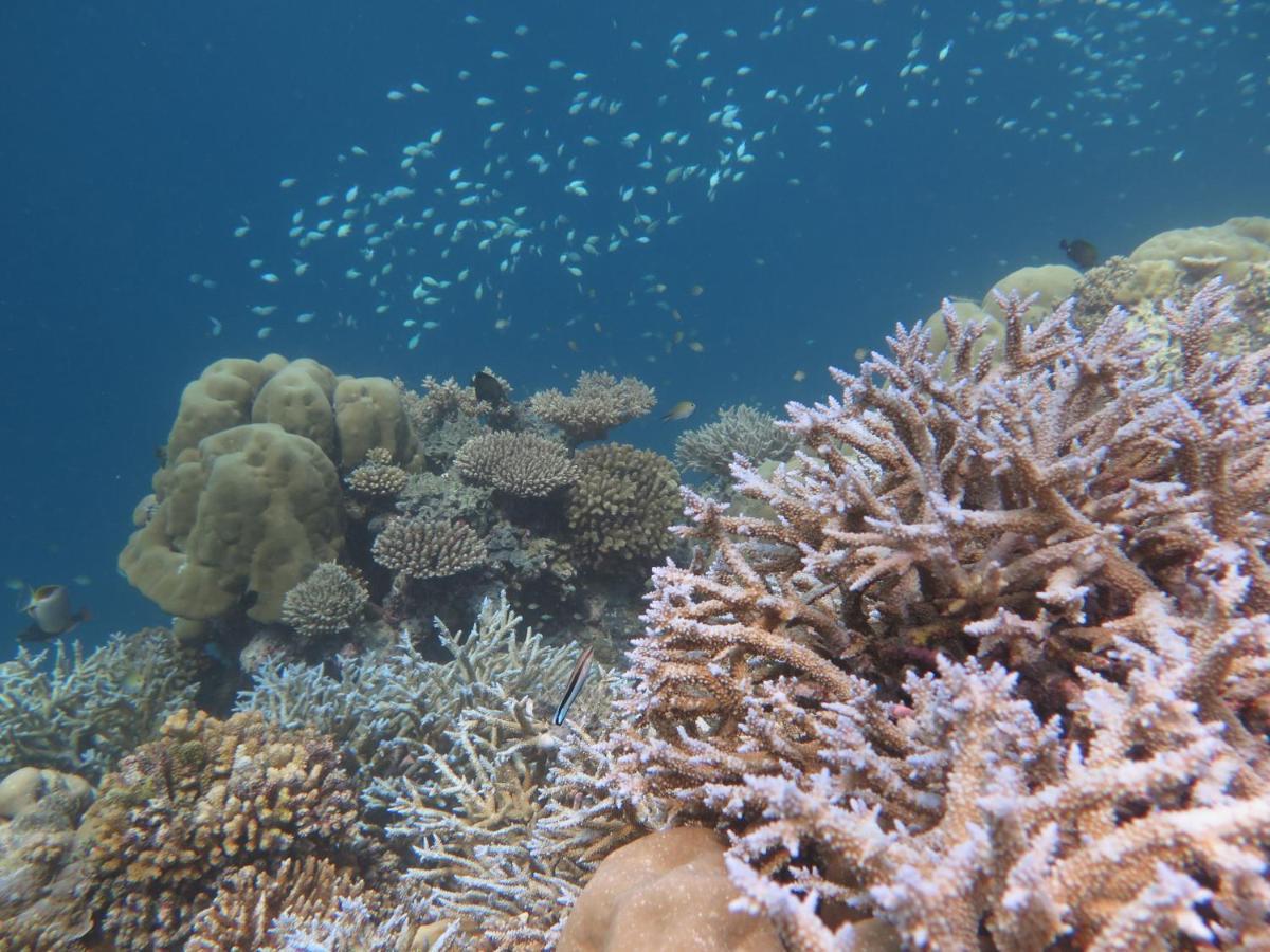 Мальдивские рифы - Angsana Ihuru