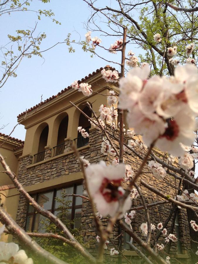 cherry blossoms dating site přihlásit se