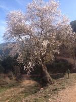 Masia CasaJoana Rural