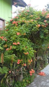 O grădină în afara Casa Rústica - Hospedaria
