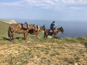 Катание на лошадях на территории виллы или поблизости