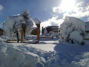 Bosque de Amancay durante el invierno