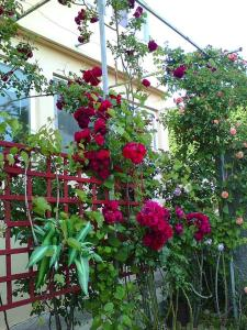 A garden outside Apartment Kastel Stafilic 11022b