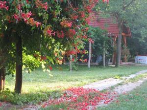 A garden outside Cserépmadár szállás és Csinyálóház