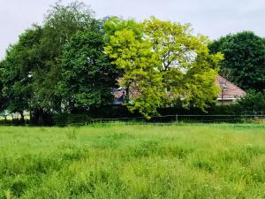 Een tuin van Boerderij Zonneveld